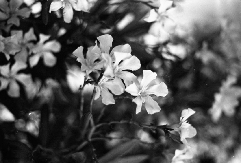 img861_flowers.jpg